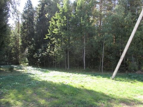 лес напротив участка