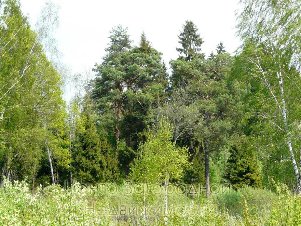 Московская область, Наро-Фоминский район, садовое товарищество Бирюлево, садовое товарищество Бирюлево, 35 9